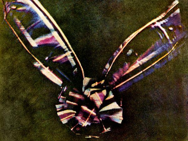 b8 maxwell prima foto a colori